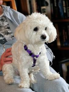 Cute little puppy, or horrid beast?