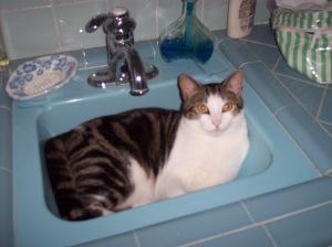 A cat...for Jody. :)